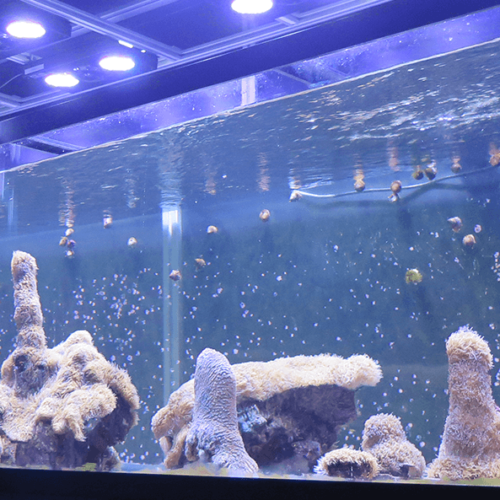 Scientists Are Growing Coral In a Lab to Save Dying Reefs