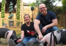 'Meat the Family' Couple Adopts Piglets Meant for Bacon