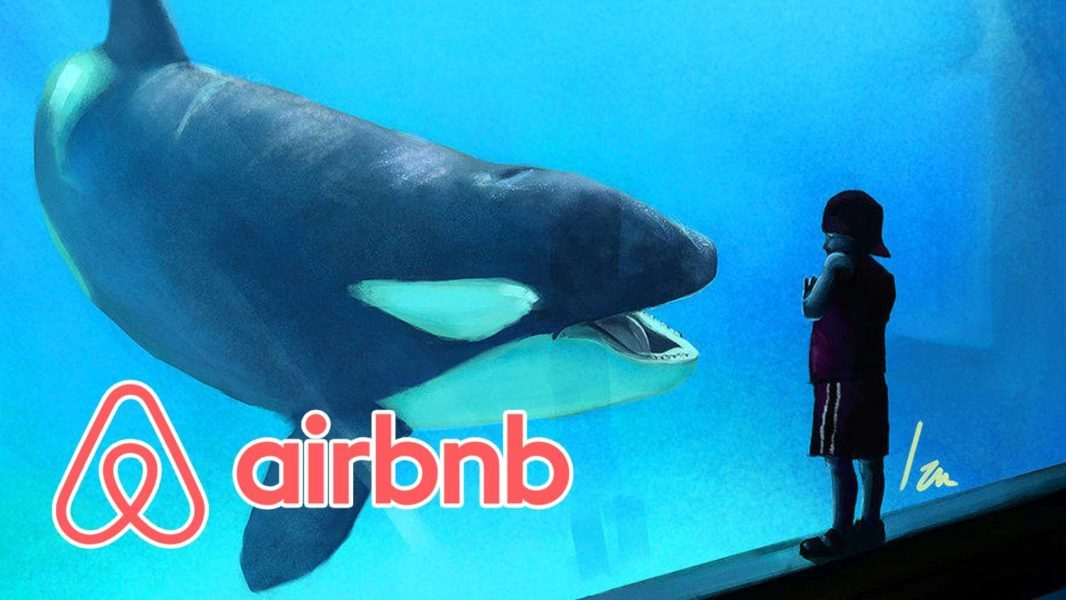 Airbnb Will No Longer Offer Experiences That Harm Animals