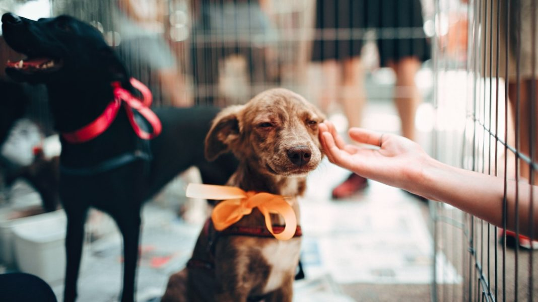 New Australian Law Recognizes Animals As Sentient Beings