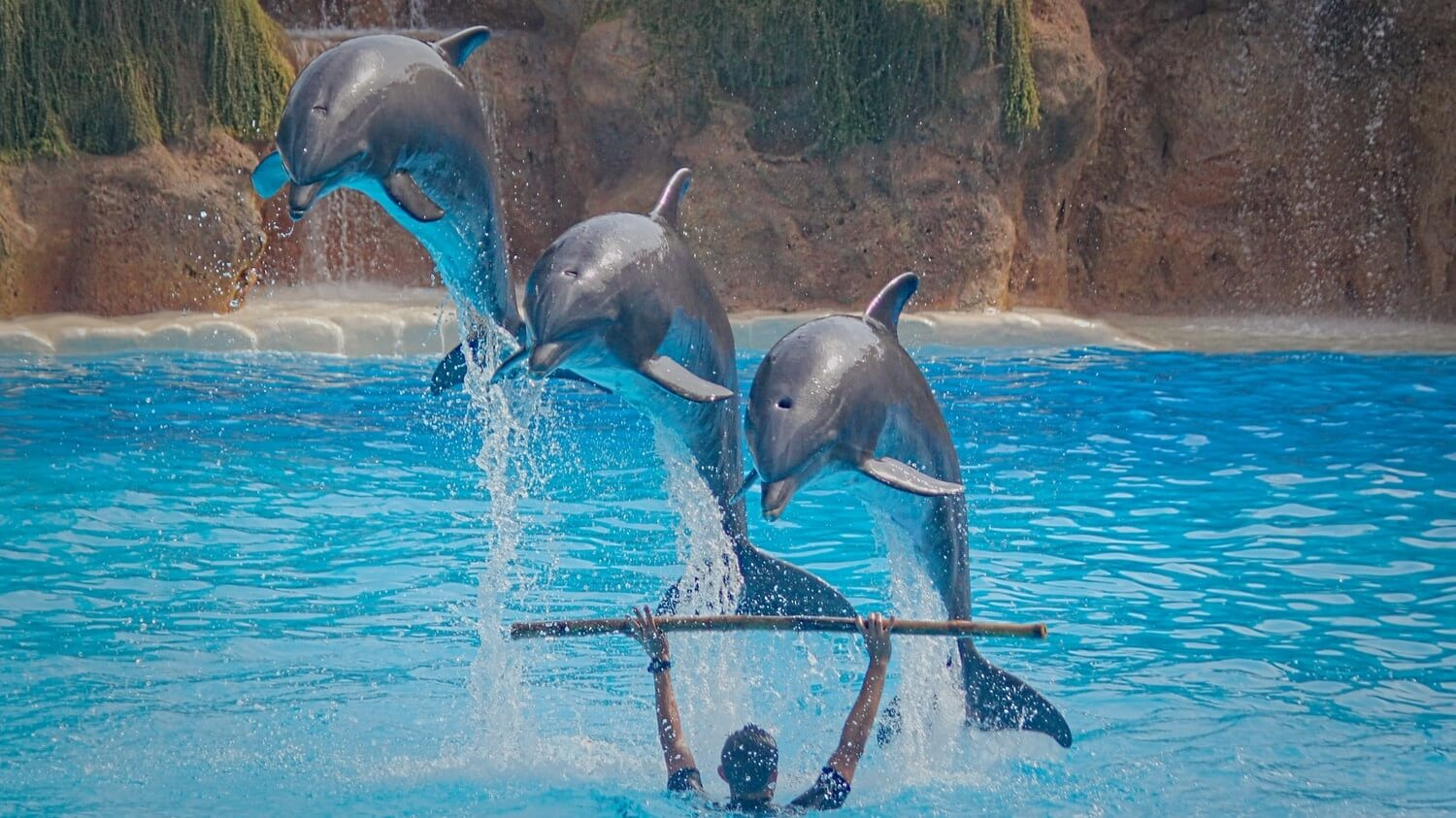 New Zealand Banned Swimming With Bottlenose Dolphins