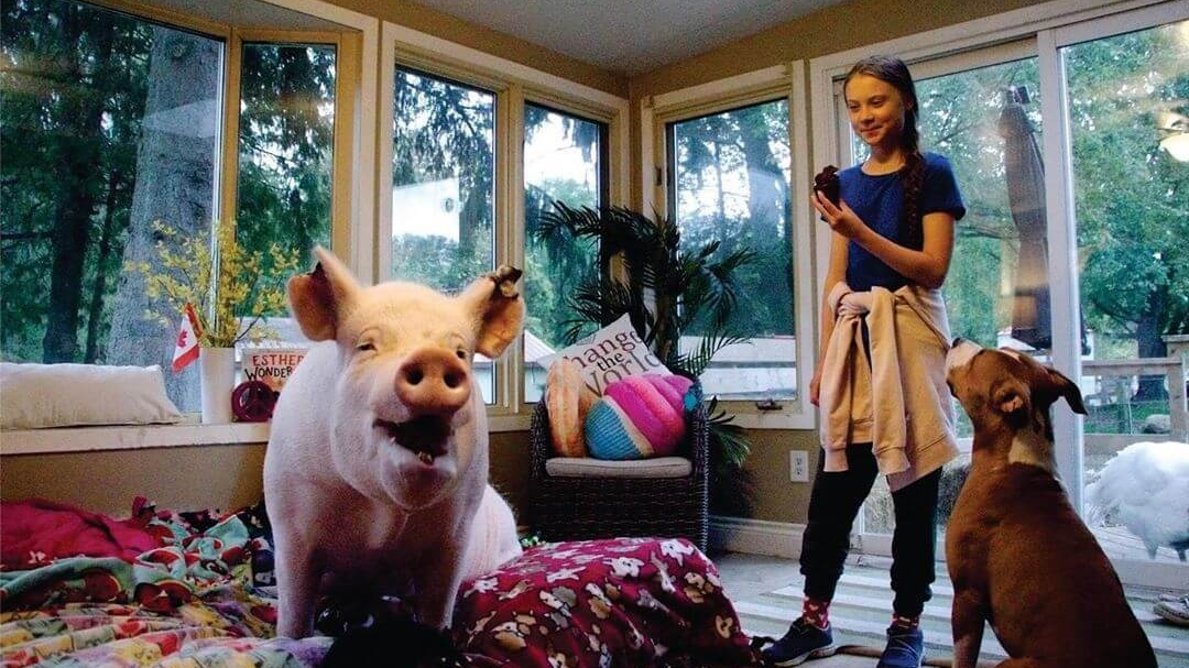 Greta Thunberg and Esther 'the Wonder Pig' Team Up to Save the World