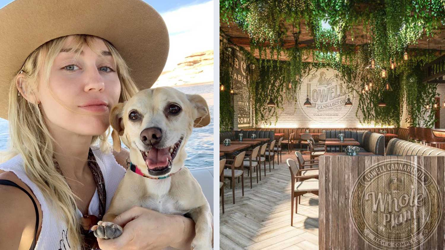 Get High and Eat Vegan Food at Miley Cyrus's New Restaurant