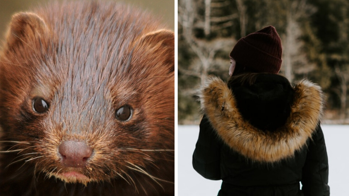 Slovakia Has Passed a Ban on Fur Farming