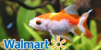 Walmart Just Banned Live Fish Sales