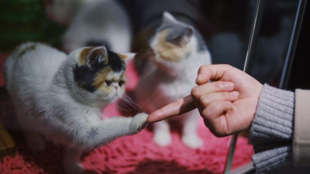 The U.S. Senate Just Made Animal Cruelty a Federal Felony