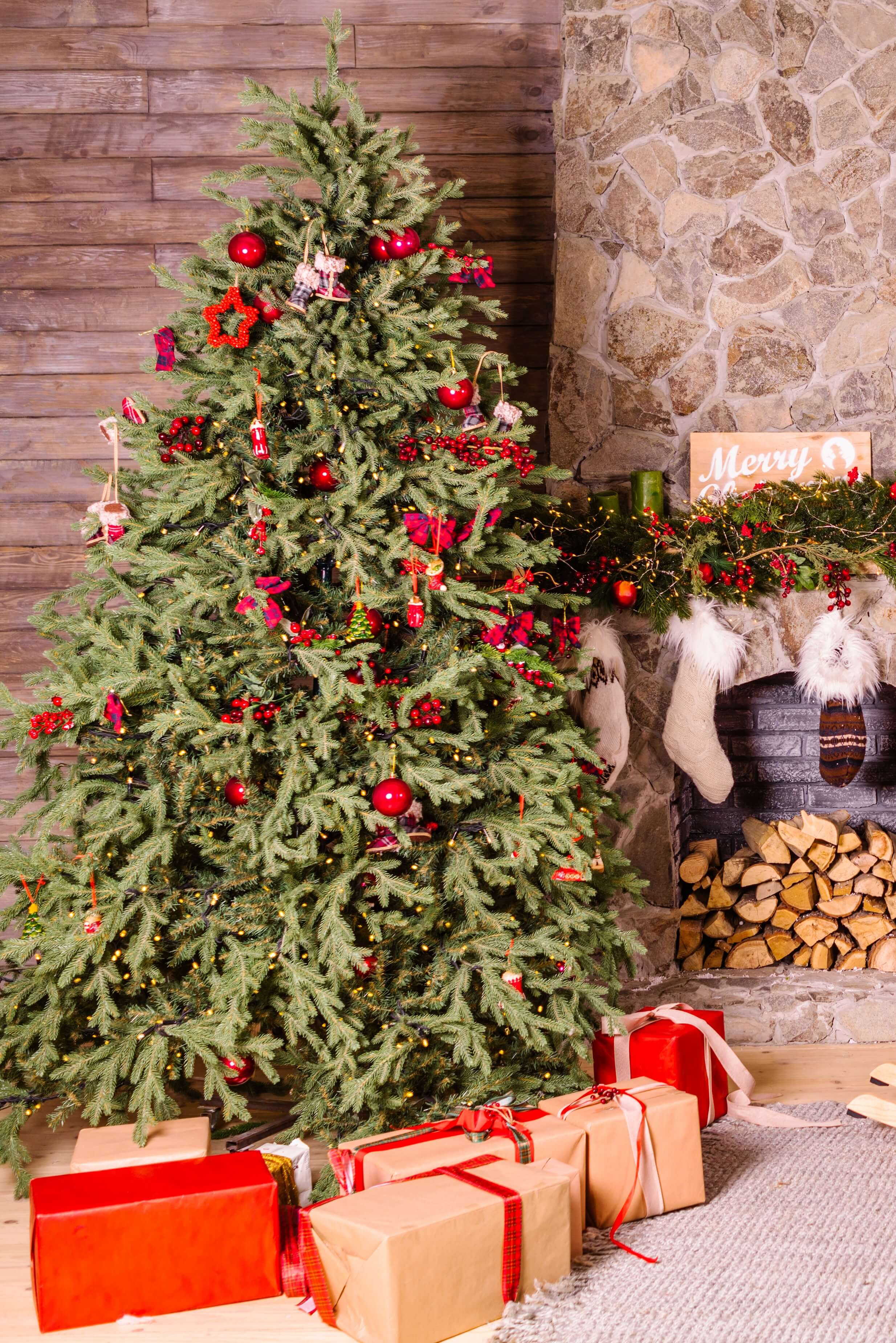Sustainable Alternatives to Christmas Trees