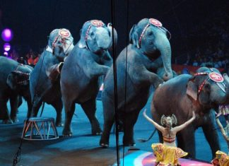 Wild Animal Circuses to be Banned in Paris