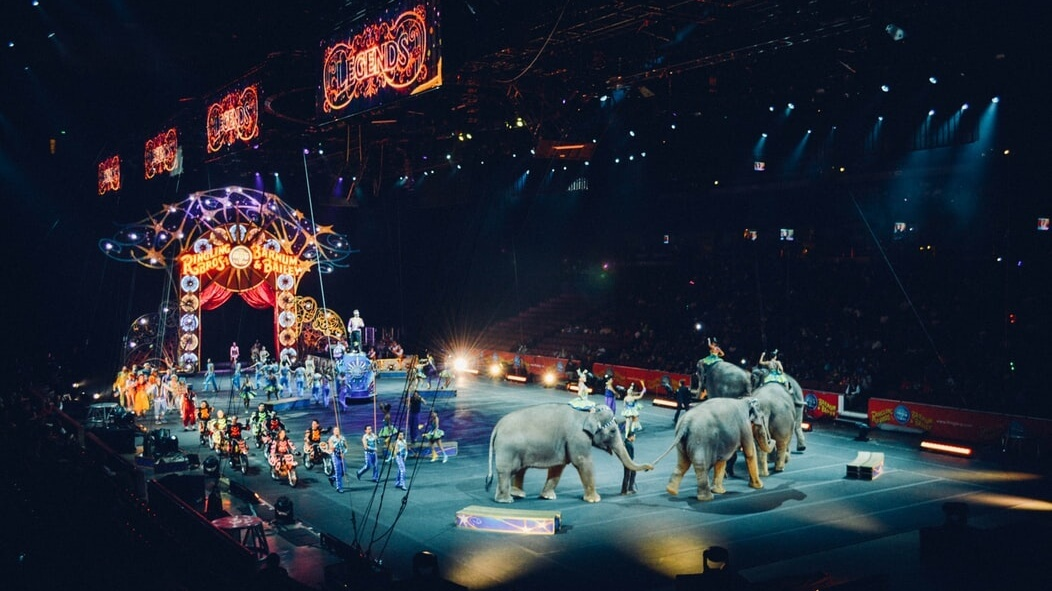 Denmark Paid $1.6 Million to Free 4 Circus Elephants