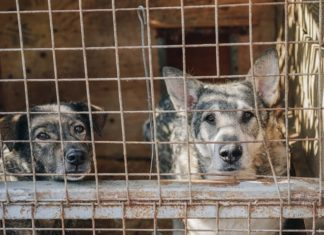 Seoul Ends the Slaughter of Dogs for Meat