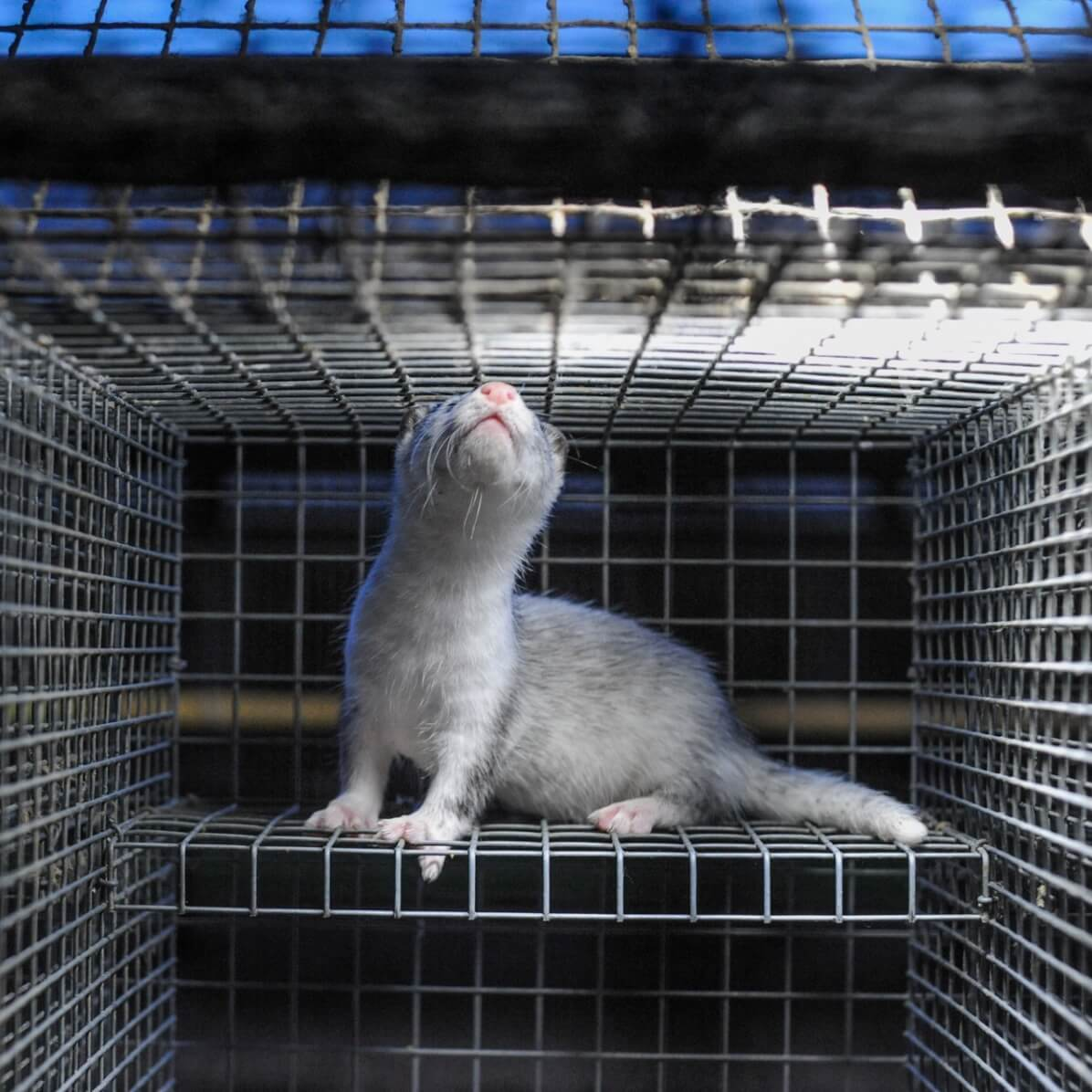 This Photographer Is Exposing Canada's Fur Industry