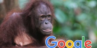 How Google's AI Could Help Protect Endangered Species