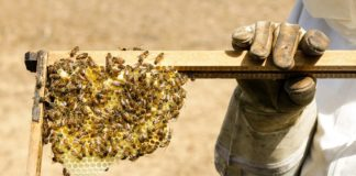 Science: Bees Are the Most Important Species on Earth