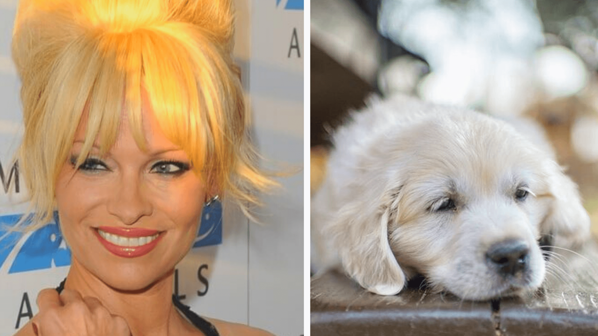 Pamela Anderson Wants to Adopt All of the Dogs From Texas A&M Lab