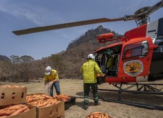 Helicopters Drop 2,200 Kilos of Veggies for Stranded Australian Wildlife