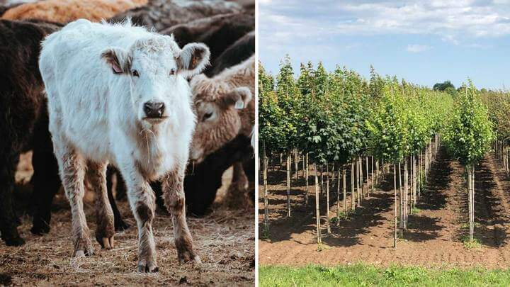 The National Trust Is Converting Beef Farms Into Forests Of 20 Million Trees