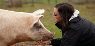 Courts Protect Veganism Same As a Religious Right
