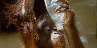 11 Most Impressive Plastic Bans Around the World