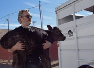 Joaquin Phoenix Rescues Cows From Slaughter Just Hours After His Oscars Speech