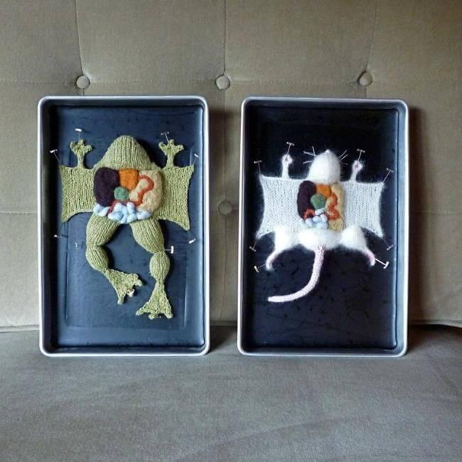 vegan-plant-based-aknitomy-dissection