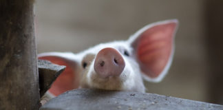 The Oldest 'Ag-Gag' Law in the U.S. Ruled Unconstitutional