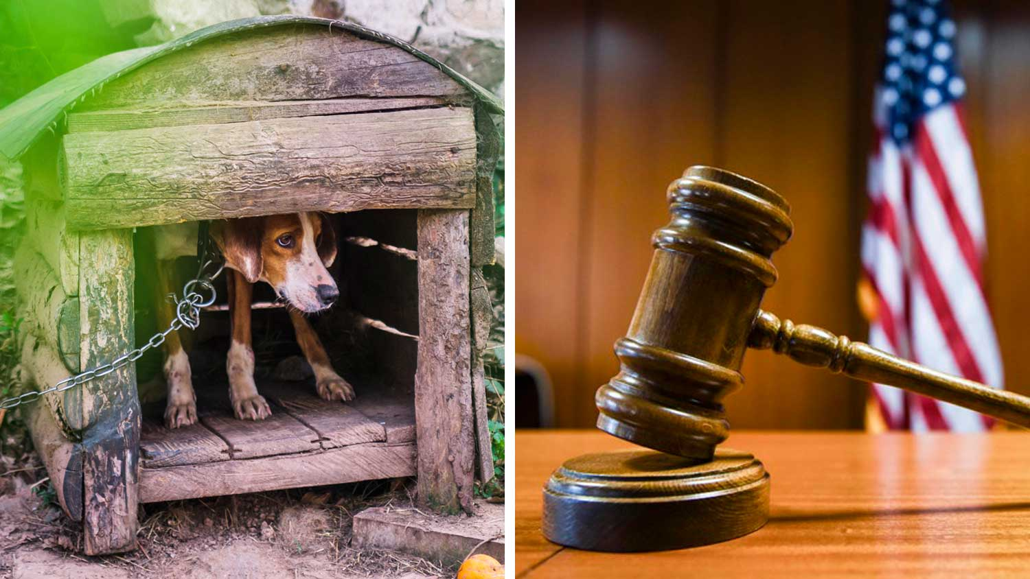 California Moves to Protect Abused Animals in the Court System