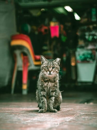 cat meat trade asia