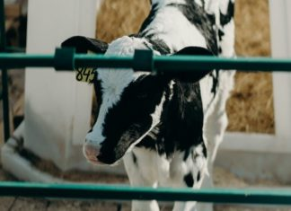 The Dairy Industry Is Collapsing Before Our Eyes: This Is Why