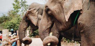 The Bangladesh Zoo Just Banned 'Cruel' Elephant Rides