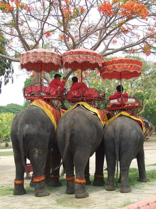 The Bangladesh Zoo Just Banned 'Cruel' Elephant Rides