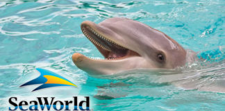 SeaWorld Just Banned Dolphin Surfing