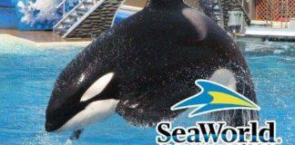 California Senator Introduces Bill to Shut Down SeaWorld