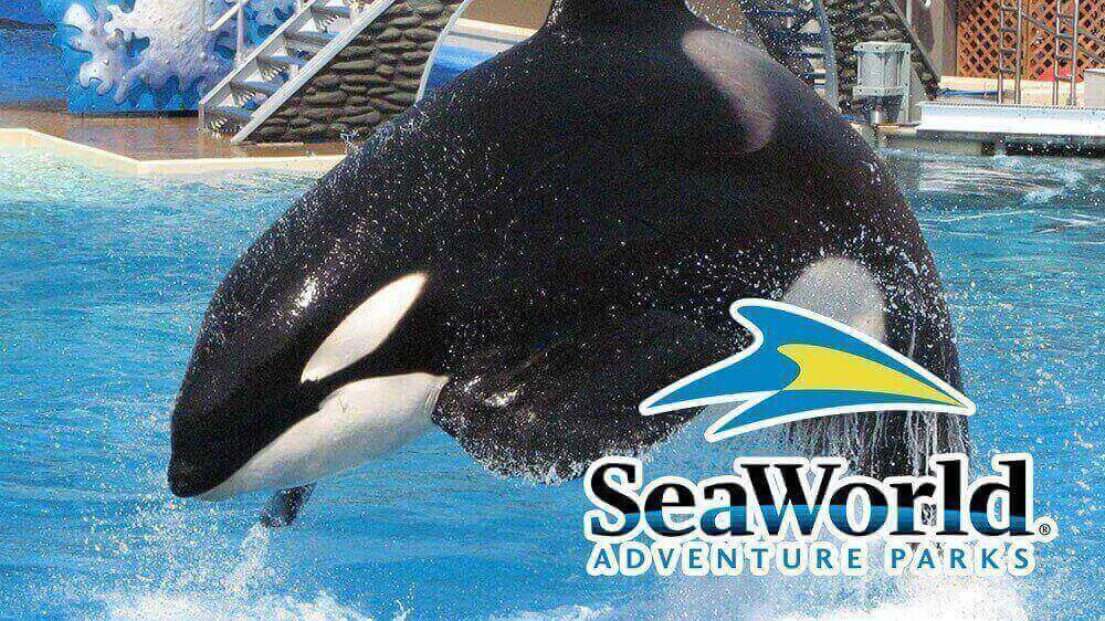California Senator Introduces Bill to Shut Down SeaWorld