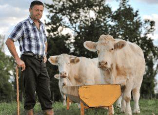 Ireland's Beef Industry May Not Recover From Coronavirus
