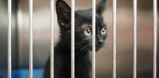 Mexico's Senate Passes a Ban on Animal Testing