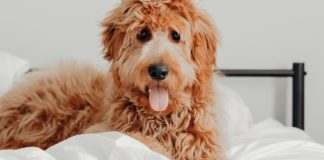 This Hotel Lets Guests Foster and Adopt Dogs