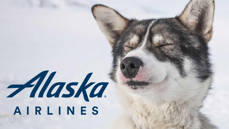 Alaska Airlines Ends 40-Year Sponsorship of the Iditarod Husky Dog Race
