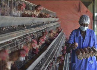A Bird Flu Outbreak Threatens Germany's Chicken Farmers