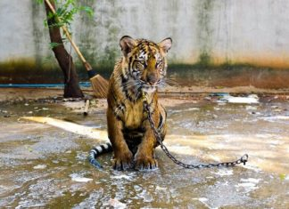Oakland Just Banned Exotic Animals In Entertainment
