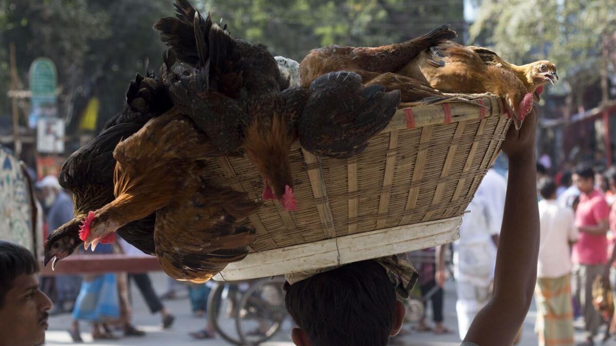 Chicken Sales Plummet Nearly 50% in India Due to Coronavirus