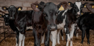 More Than 3200 U.S. Dairy Farms Shut Down In 2019
