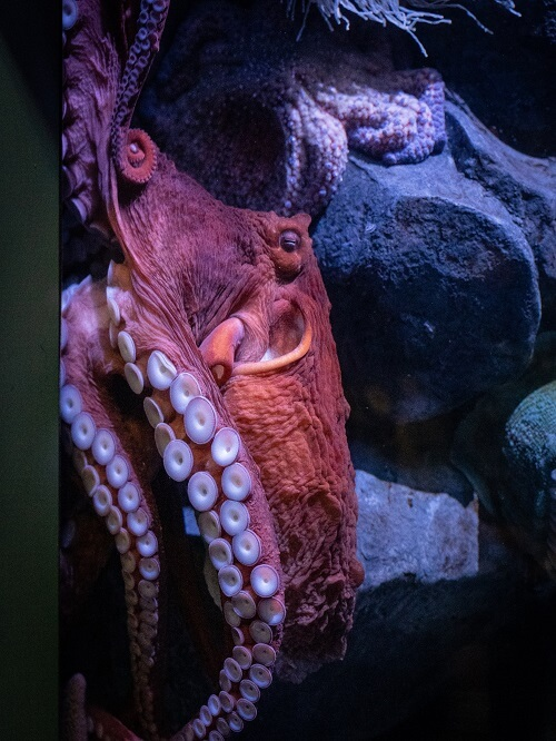 Are Octopuses the Smartest Animals In the Oceans?