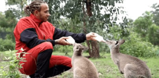 Lewis Hamilton Feeds Baby Kangaroos Displaced by Bushfires