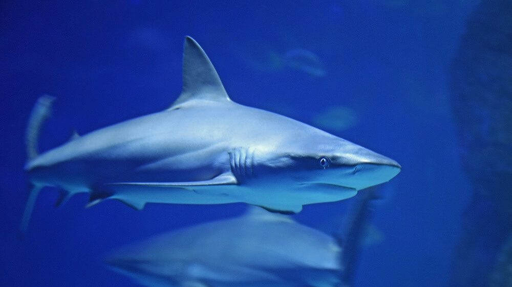 Florida's Senate Just Passed the Largest Shark Fin Ban In the U.S.