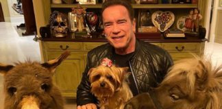 Arnold Schwarzenegger's Coronavirus Lockdown Is Ridiculously Vegan