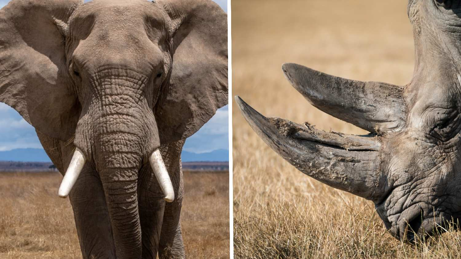 Washington DC Just Banned the Sale of Elephant Ivory and Rhino Horn