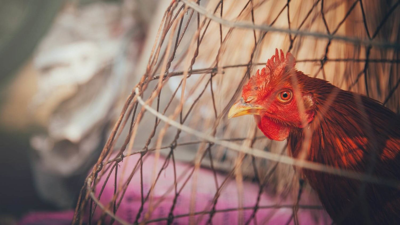WHO Urged To Ban Live Animal Markets After Coronavirus