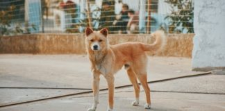 China Has Just Told Citizens to Stop Eating Dog Meat