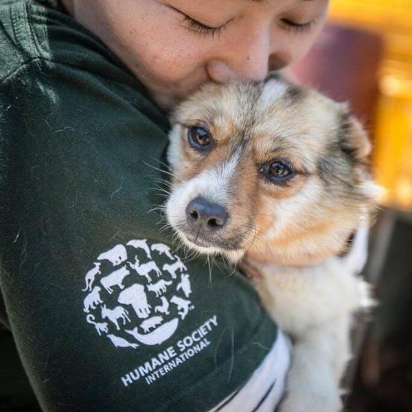 china dog meat ban