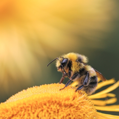 EU Protects Bees By Mandating a 50% Drop in Pesticides By 2030